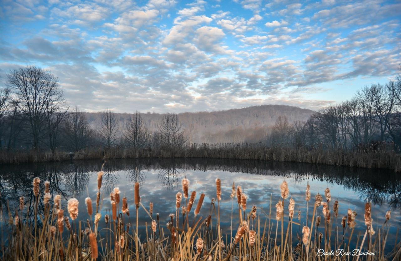 Forgiveness on the Pond